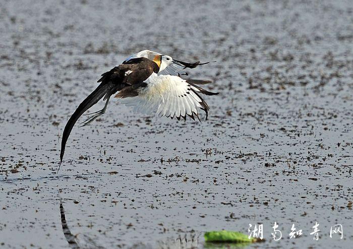飞翔2.jpg